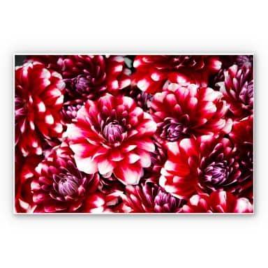 Wandbild Rote Blütenpracht