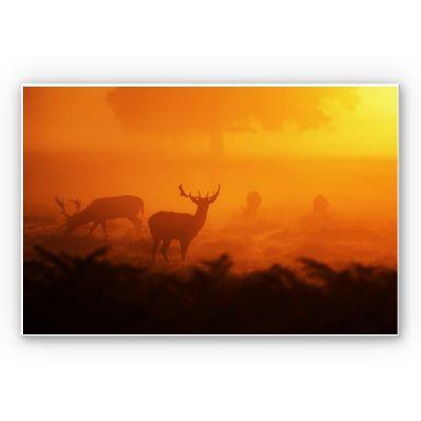 Wandbild Hirsche im Sonnenuntergang