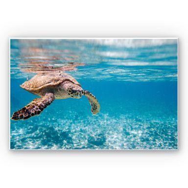 Wandbild Schildkröte auf Reisen