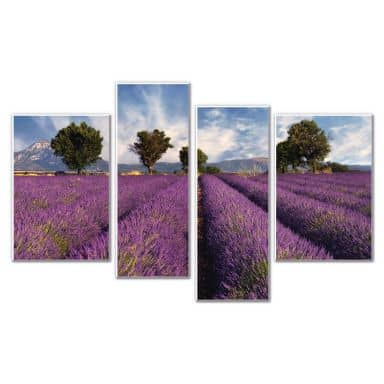 Forex print Lavender field (4 parts)