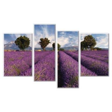 Wandbild Lavendelfeld (4-teilig)