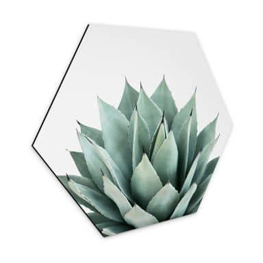 Hexagon Dibond Sisi & Seb - Succulents