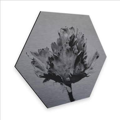 Hexagon - Alu-Dibond Kadam - Nachtkerze