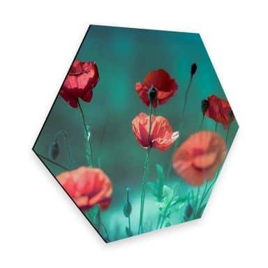 Hexagon - Alu-Dibond Delgado - Mohn Aquamarin