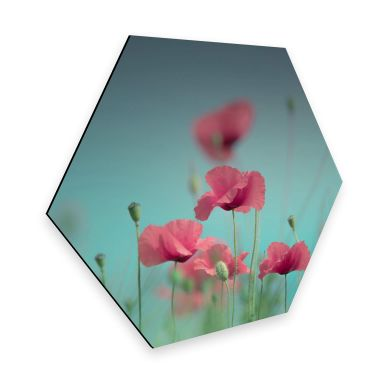 Hexagon - Alu-Dibond Delgado – Mohnblumen Pastell