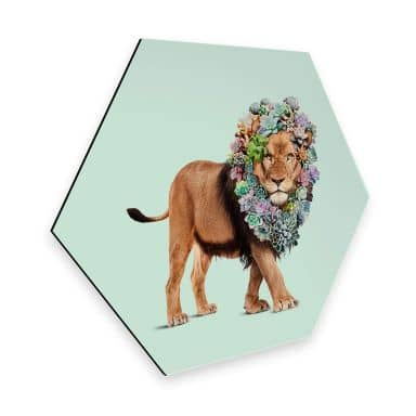 Hexagon - Alu-Dibond Loose - Succulent Lion