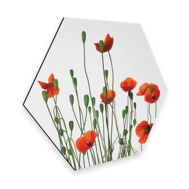 Hexagon - Alu-Dibond Kadam - Flora Mohn