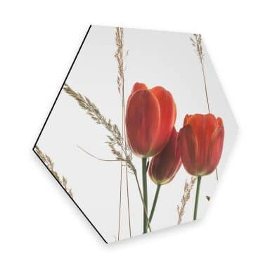Hexagon - Alu-Dibond Kadam - Flora Tulpe