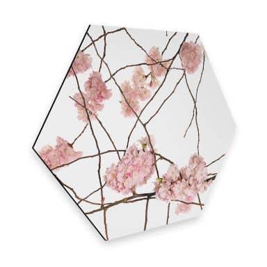 Hexagon Dibond Kadam - Cherry Blossoms