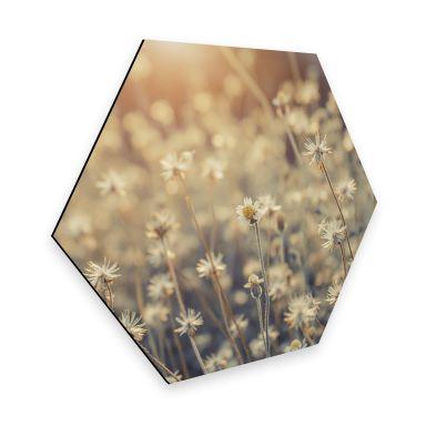 Hexagon - Alu-Dibond Mexican Daisy