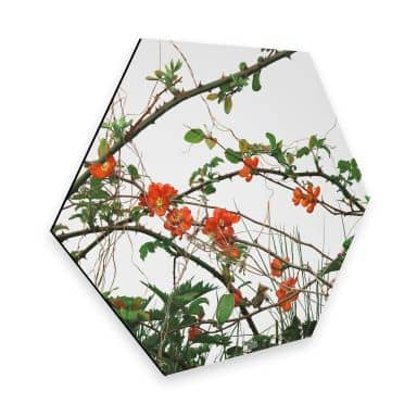 Hexagon Alu-Dibond Kadam - Flora Bloesem