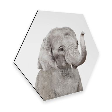 Hexagon Dibond Sisi & Seb - Baby Elephant