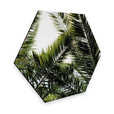 Hexagon alu-dibond - Palmtrees