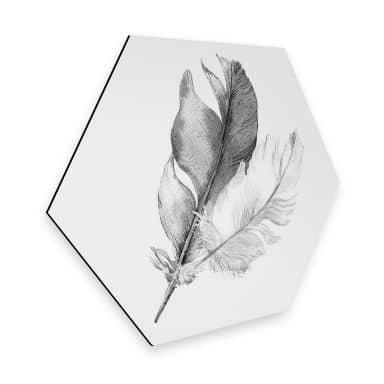 Hexagon Alu-Dibond - Feathers