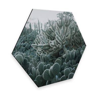 Hexagon - Alu-Dibond - Kakteen