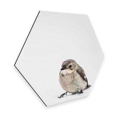 Hexagon Alu-Dibond Little Bird