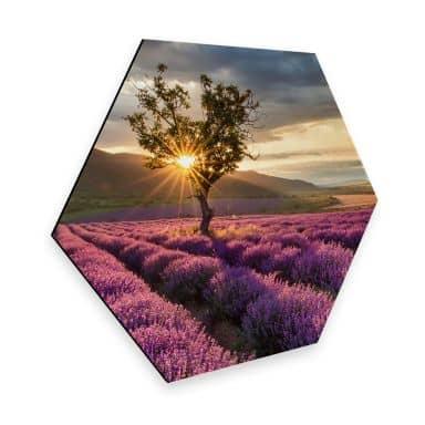 Hexagon - Alu-Dibond - Lavendelblüte in der Provennce