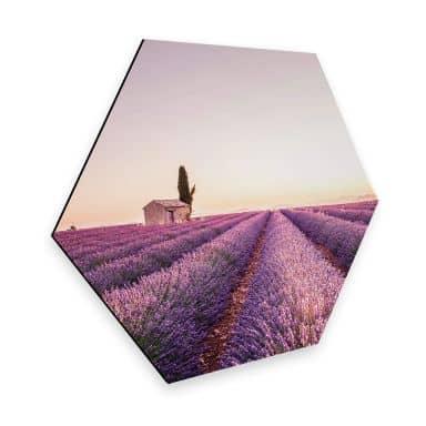 Hexagon Alu-Dibond - Lavendel