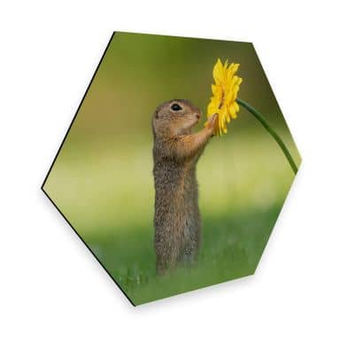 Hexagon - Alu-Dibond Dick van Duijn - Squirrel holding flower