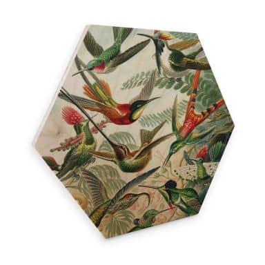 Hexagon - Holz Haeckel - Kolibris