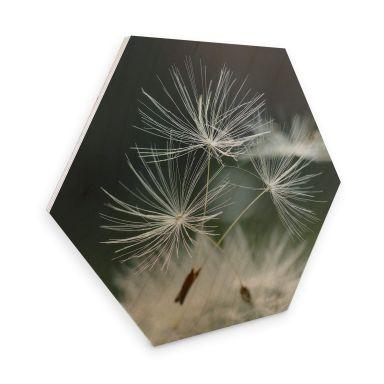 Hexagone - Placage bois de bouleau Delgado - Variété de pissenlits