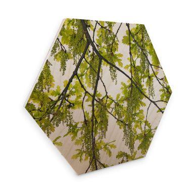 Hexagon - Birch veneer Kadam - Oak tree
