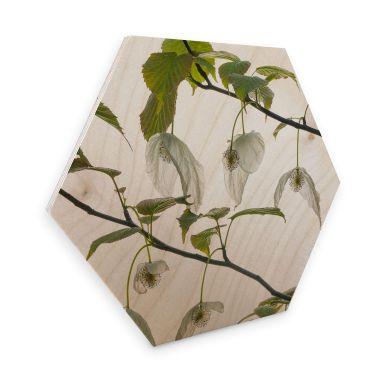 Hexagon Birch veneer - Tan Kadam - Dove Tree