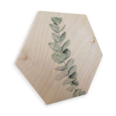 Hexagon Wood - Sisi & Seb - Eucalyptus Branch