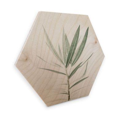 Hexagon Hout Sisi & Seb - Oleander