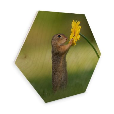 Hexagon - Wood Dick van Duijn - Squirrel holding flower