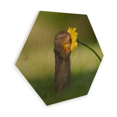 Hexagone - Placage bois de bouleau - van Duijn - Un petit écureuil sentant une fleur