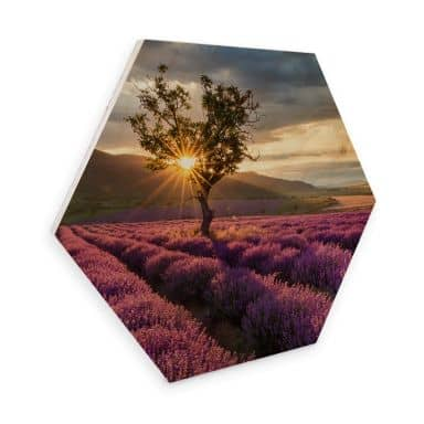 Hexagon - Holz Birke-Furnier - Lavendelblüte in der Provence