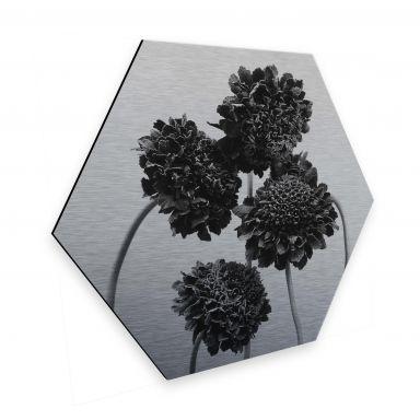Hexagon - Alu-Dibond-Silber - Kadam - Schokoladenblume