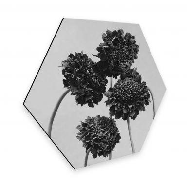 Hexagon - Alu-Dibond - Kadam - Schokoladenblume