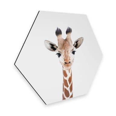 Hexagon Dibond Sisi & Seb - Baby Giraffe