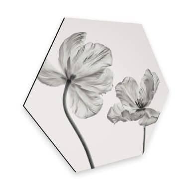 Hexagon - Alu-Dibond Grønkjær - Tulpenblüte