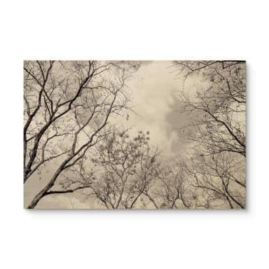 Holzposter Baumkronen im Himmel