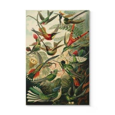 Holzposter Haeckel - Kolibris