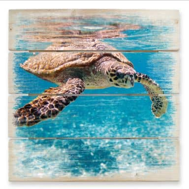 Swimming Turtle - Wood Print
