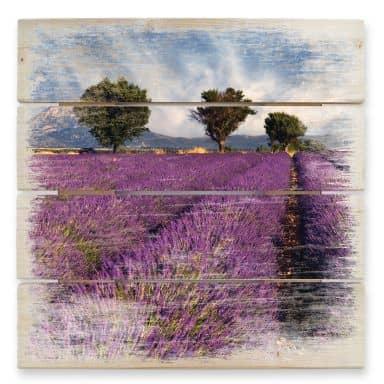 Holzbild Lavendelfeld