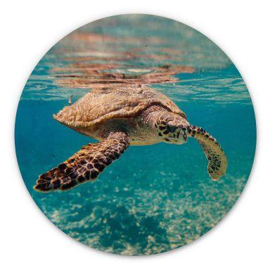 Holzbild Eine Schildkröte auf Reisen - Rund