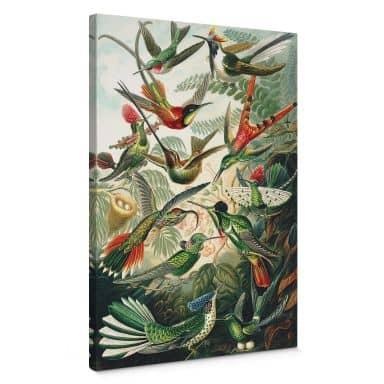 Leinwandbild Haeckel - Kolibris