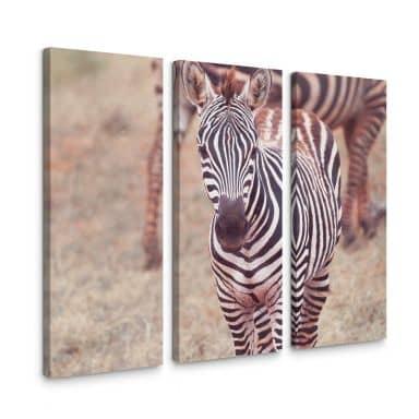 Leinwandbild Zebra Fohlen (3-teilig)