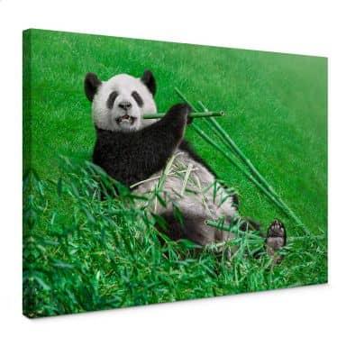 Canvas Print Ben Heine – Happy Panda
