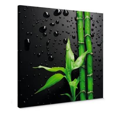 Leinwandbild Bamboo Over Black - quadratisch