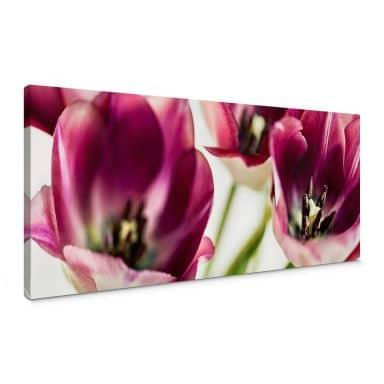 Leinwandbild Bsmart - Tulips
