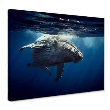 Tableau sur toile Baleine à bosse en plongée