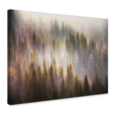 Tableau sur toile Chopra - Forêt de conifères