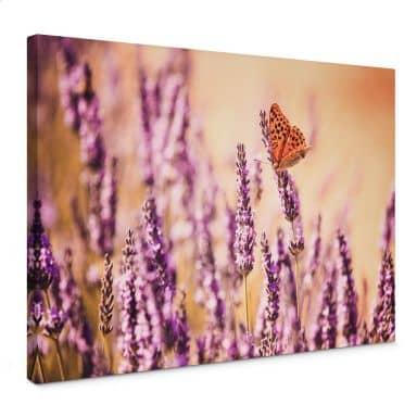 Leinwandbild Colombo - Der Schmetterling im Lavendel