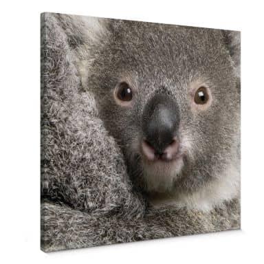 Leinwandbild Cuddly Koala